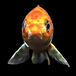 Blub, ik ben een vis van