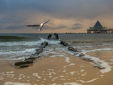 Strand von Heringsdorf auf Usedom an der Ostsee von Animaflora PicsStock