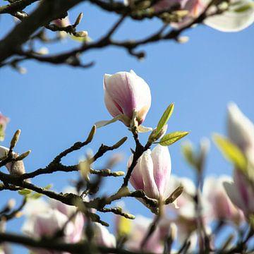 De magnolia van Petra Brouwer