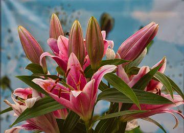 Roze lelies op een blauwe achtergrond van J..M de Jong-Jansen