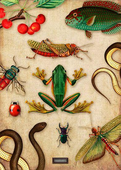 Tropische schoolplaat met reptielen en insecten