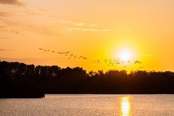 fliegende Gänse von Tania Perneel