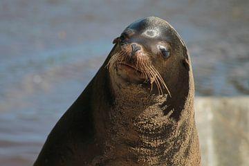 Zeeleeuw van Tineke Kooistra