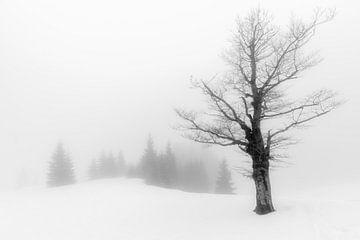 Mistig sneeuw landschap von Henri van Avezaath