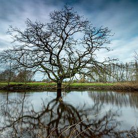De markante boom van Gerry van Roosmalen