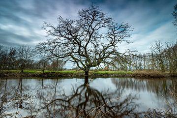 Der markante Baum von Gerry van Roosmalen