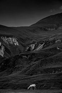 Pyreneeën