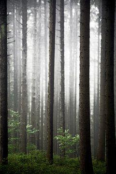 Wald im Nebel von Jürgen Wiesler