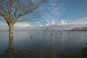 Hoogwater bij haven Maurik