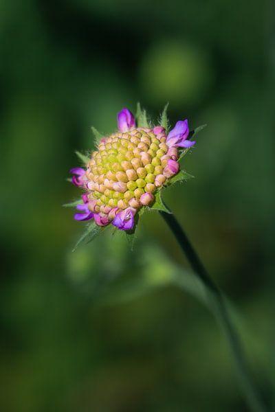Mooie zomerbloem in closeup