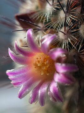Bloeiende cactus van Martijn Wit