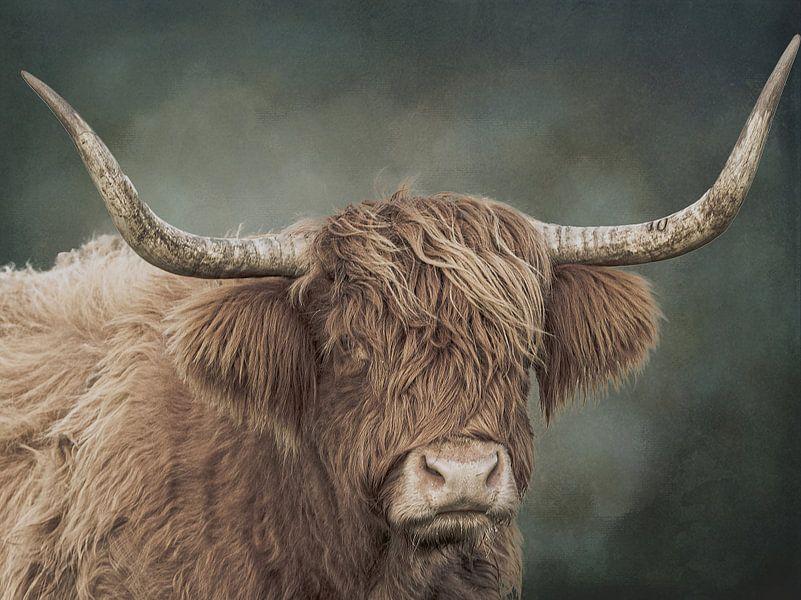 Porträt eines schottischen Highlanders mit Aquarellhintergrund von KB Design & Photography (Karen Brouwer)