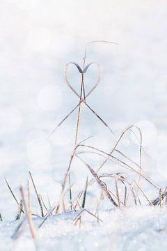 Herz von Thomas Heitz