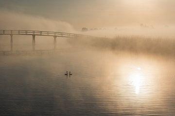 Paar Seetaucher in nebliger Traumwelt bei Sonnenaufgang von Beeldbank Alblasserwaard