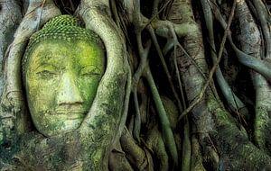 De boom met het Boeddha hoofd van