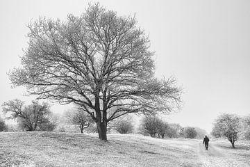 Winter-Wunderland von Bob Bleeker