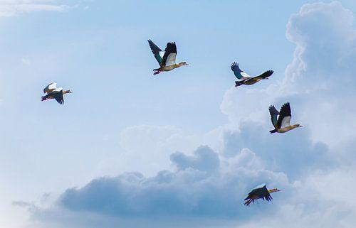 Vogelvlucht van