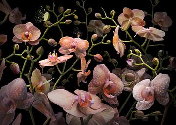 Orchidea mandarina von Olaf Bruhn