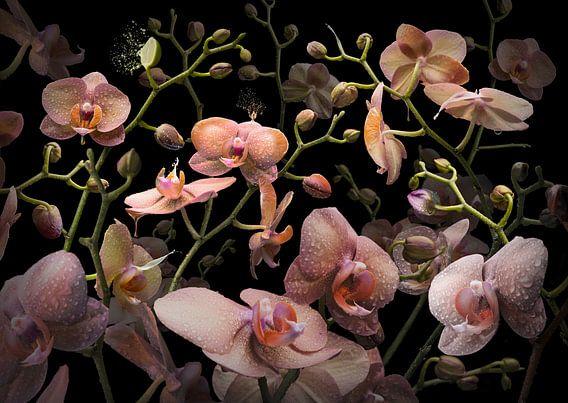 Orchidea mandarina van Olaf Bruhn