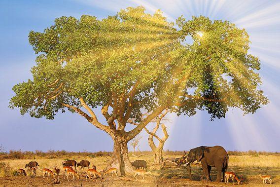 Wundervolles Südafrika von W. Woyke