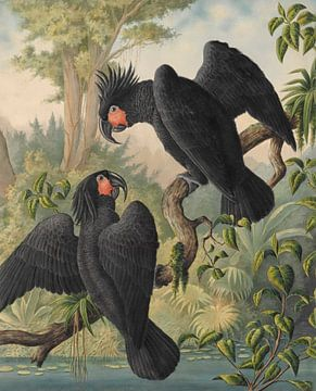 Schwarze Kakadus von Andrea Haase
