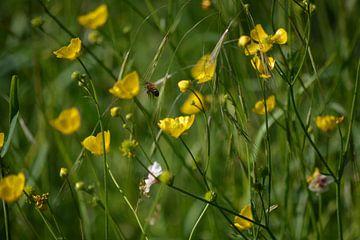 Fliegende Biene von Michael van Eijk