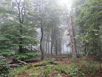 Morgendlicher Nebel im Wald von Carin IJpelaar