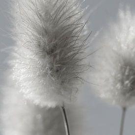 Fluffy sur Carla Mesken-Dijkhoff