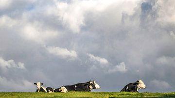 Vier zwart/wit gevlekte koeien genietend in het groene gras van Michel Seelen