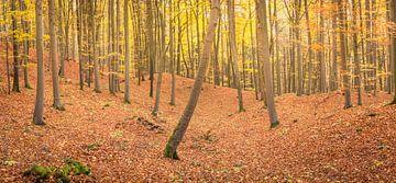 Herfstpanorama van een bos van Tobias Luxberg