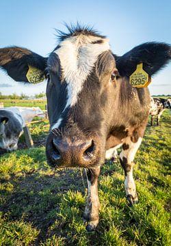 Kuh in der Landschaft von Dennis Kuzee