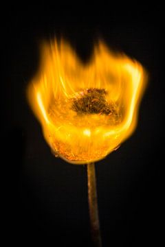 Burning Dandelion 1 van Liane Boddaert