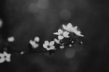 Frühlingsblüte Schwarz-Weiß von Eke Salomé