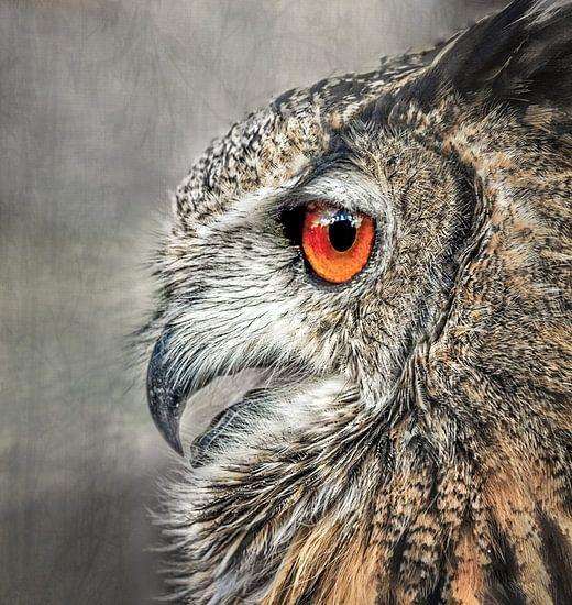 night bird von Vera Kämpfe