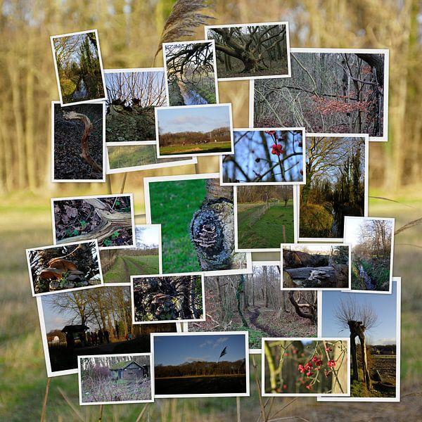 Collage natuur van Erik Reijnders
