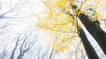 Herfst van Loulou Beavers