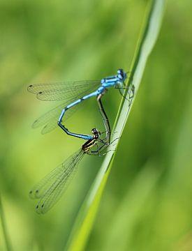 Libellen-Herz II von Iris Volkmar
