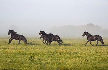 Friese paarden von Jitske Van der gaast
