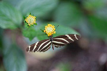 Schmetterling in Nahaufnahme! von Rob Coorens