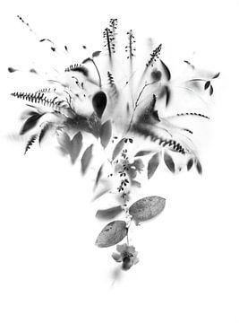 Natürlicher Schleier von Teis Albers