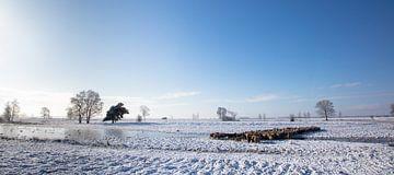 Schaapskudde in de sneeuw. van Tony Ruiter