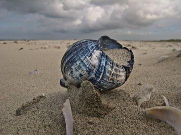 Schelp op strand van Mooie Foto