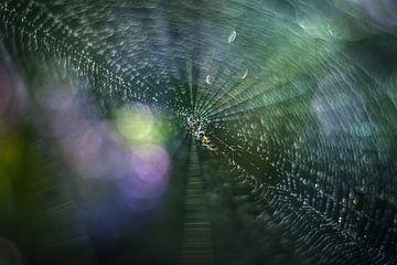 Une très petite araignée sur Gonnie van de Schans
