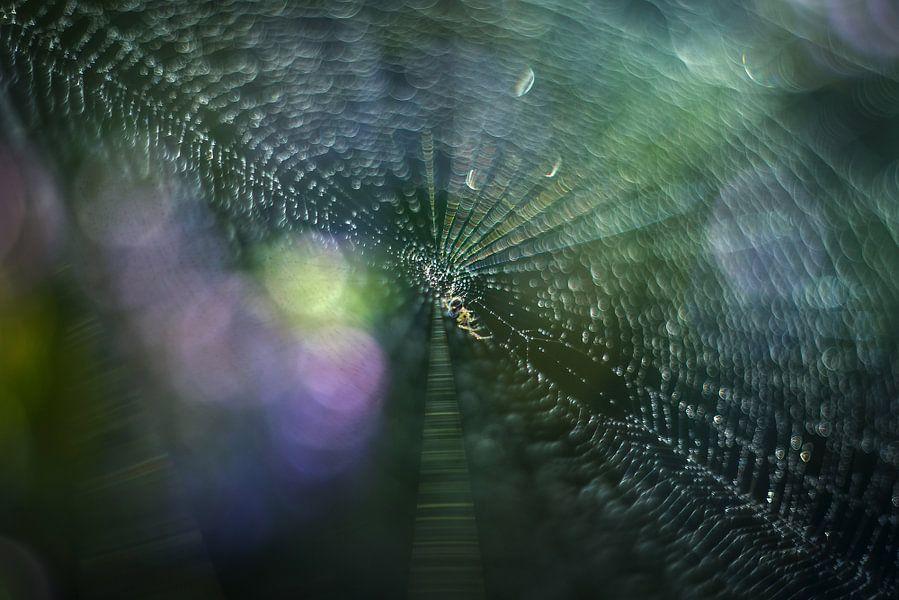 De spin wiedewin van Gonnie van de Schans