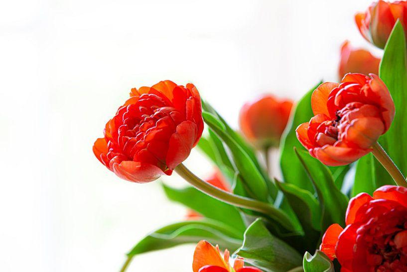 La Tulip van Nanouk el Gamal - Wijchers (Photonook)
