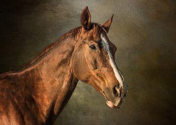 Pferd - Porträtbild eines braunen englischen Vollblüters von Diana van Tankeren