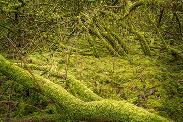 Mos bos #2 van Xander Haenen