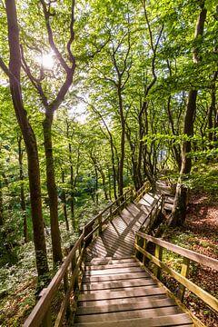 Waldweg auf der Insel Møn in Dänemark von