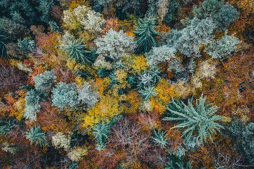 Luftaufnahme Der Wald Fichten Bäume