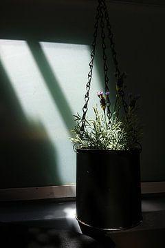 Lavendel in een hangende metalen blik van Sense Photography